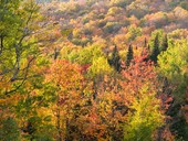 Fall colours in the Eastern Townships in Quebec, Canada © mbruxelle - Fotolia.com