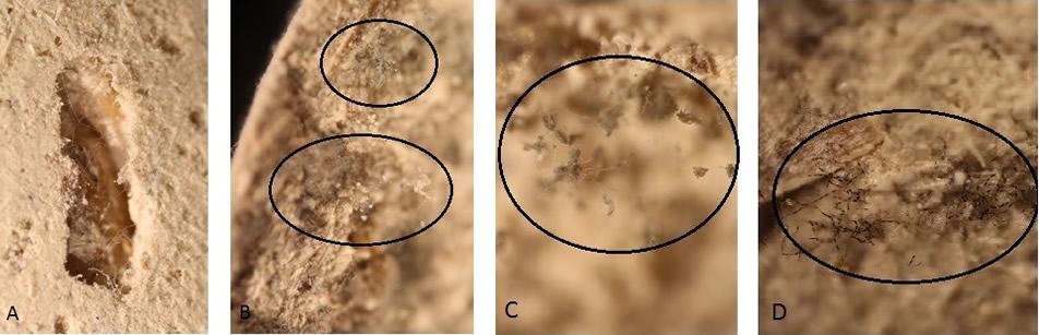 Obrázek 3: Fotodokumentace omítky Žlutá Cottage po28 dnech, A– ve 33% RV, zvětšení 40x, B – v84% RV, zvětšení 40x, C – v84% RV, zvětšení 100x, D – v84% RV, zvětšení 100x